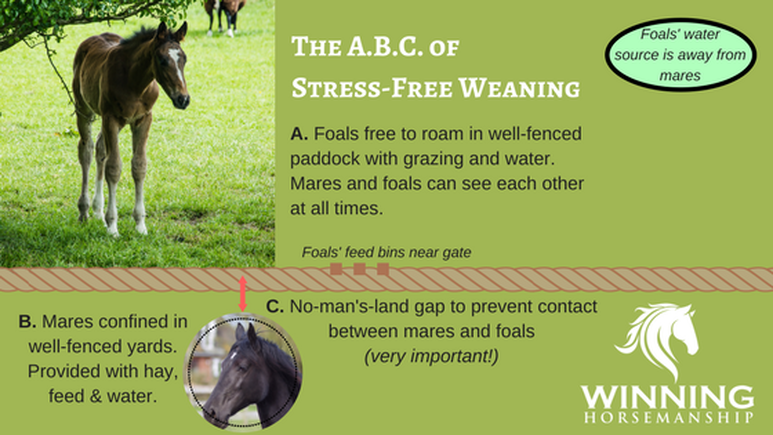 How to wean a foal suggestions and tips